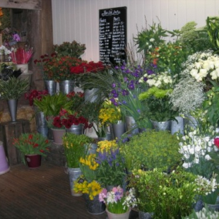Florists in Cranbrook Sold